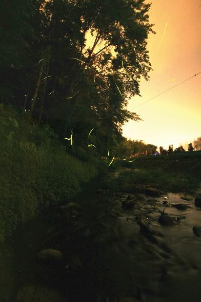 伊豆の国市韮山 反射炉でホタル観賞