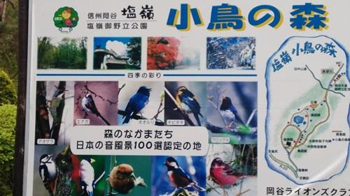 T201505 SHINSYUU24